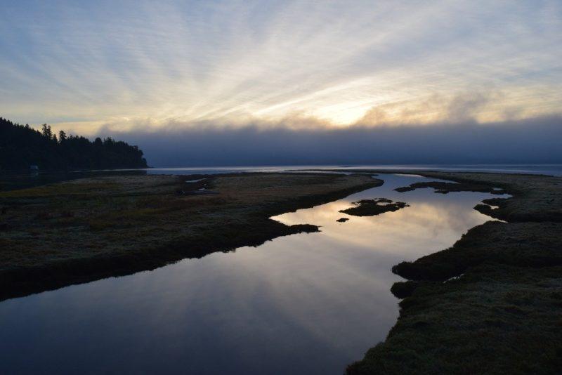 河口は生物の楽園